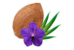 Coconut isolated on white Royalty Free Stock Photos