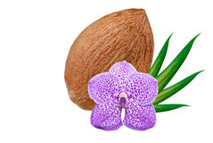 Coconut isolated on white Royalty Free Stock Image