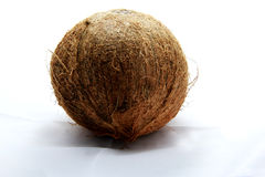 Coconut isolated white plant fruit tropical coco Royalty Free Stock Images