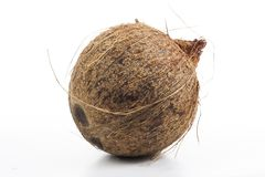 Coconut on isolated white studio background. Closeup photo. Clipping path. Easy to use. White background. Cutout cut out. Coconut whole coconut with fiberson royalty free stock photo