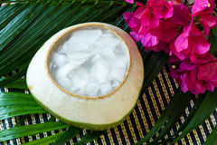 Coconut Jelly asian dessert Stock Images