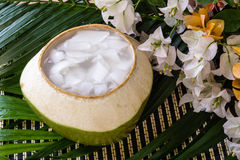Coconut Jelly asian dessert Stock Photography