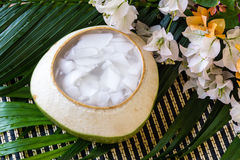 Coconut Jelly asian dessert Royalty Free Stock Photography