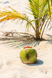 Coconut juice Stock Photography