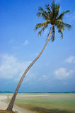 Coconut Koh Samui Royalty Free Stock Photography