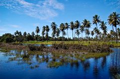 Coconut Landscape lake 3 Royalty Free Stock Photography