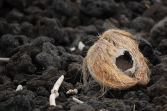 Coconut on lava rock shore Royalty Free Stock Photography