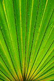 Coconut leaf Stock Images