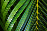 Coconut leaf background Stock Images