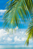 Coconut leaf with blue sky in back Stock Photography