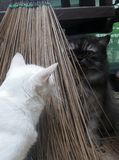Coconut leaf broom between two cat playing hide and seek on sunny day Royalty Free Stock Photos