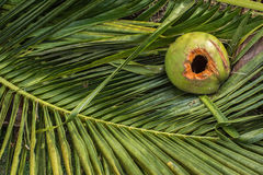 Coconut on the leaf stock image