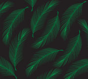 Coconut leaf. Illustration   colour Royalty Free Stock Images