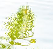 Coconut leaf reflect form water. Surface Stock Photo