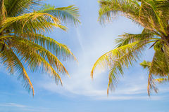 Coconut leaf and sky Royalty Free Stock Photography