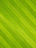 coconut leaf texture Royalty Free Stock Images