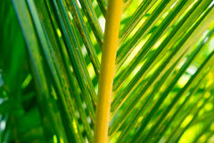 Coconut leaf texture background Royalty Free Stock Photography