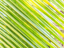 Coconut leaf texture background Stock Images