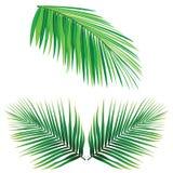 Coconut Leaf Vector Stock Photos