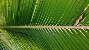Coconut leaf wallpaper Stock Photos