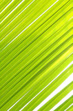 Coconut leave Royalty Free Stock Image