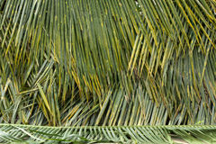 Coconut leave fence Stock Images