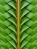 coconut leaves Stock Photos