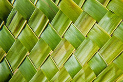 Coconut leaves Stock Image