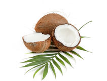 Coconut with leaves Royalty Free Stock Images