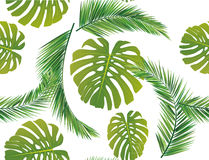 Coconut leaves. Background seamless repeat Stock Photography