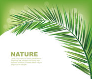 Coconut leaves. Background summer nature Royalty Free Stock Image
