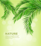 Coconut leaves. Background summer nature Royalty Free Stock Photos