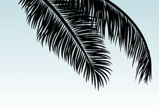 Coconut leaves with copy space tropical summer background royalty free stock photos