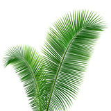 Coconut leaves design background Stock Photo