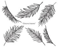 Coconut leaves drawing and sketch. Coconut leaves drawing and sketch with line-art on white backgrounds Stock Photo