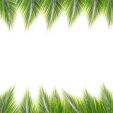 Coconut leaves frame Royalty Free Stock Photo