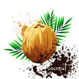 Coconut with leaves isolated on white background Stock Photos