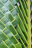 Coconut leaves weave Royalty Free Stock Photo