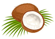 Coconut with leaves on a white background. Stock Photo