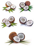 Coconut with leaves Stock Images