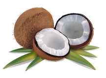 Coconut with leaves Royalty Free Stock Image
