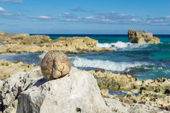 A coconut lies on a stone Royalty Free Stock Photo