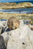 A coconut lies on a stone Royalty Free Stock Photos