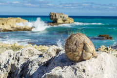 A coconut lies on a stone Stock Photos