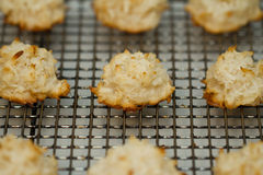 Coconut Macaroon Royalty Free Stock Photo