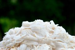 Coconut meat Stock Image