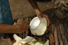 Coconut Meat is Expertly Removed for a Snack Royalty Free Stock Images