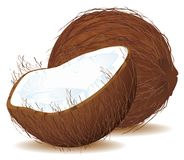 Coconut with Milk. A Vector Coconut with his milk Royalty Free Stock Photography