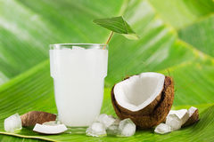 Coconut milk. Refreshing coconut milk drink or cocktail with ice and coconuts on banana leaves Royalty Free Stock Images
