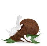 Coconut with milk splash Royalty Free Stock Photos